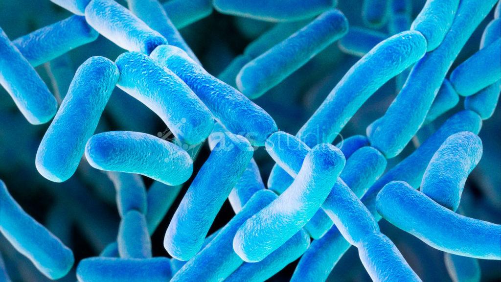 axs-studio-bacillus-anthracis-bacteria-anthrax-scientific-illustration-011