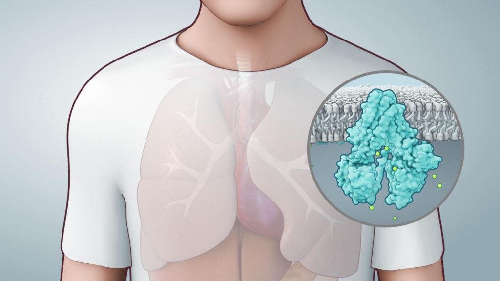axs-studio-cystic-fibrosis-mechanism-of-disease-mod-animation-01