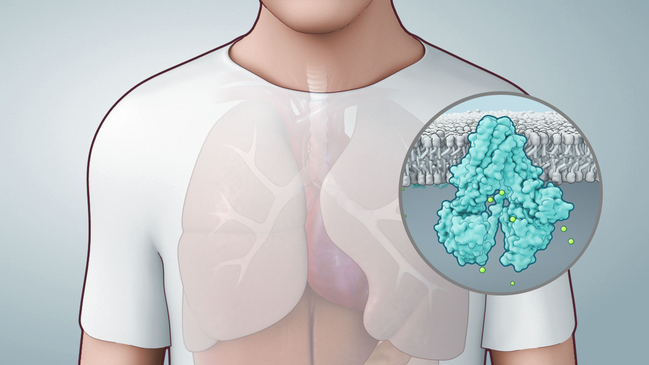 axs-studio-cystic-fibrosis-mechanism-of-disease-mod-animation-01