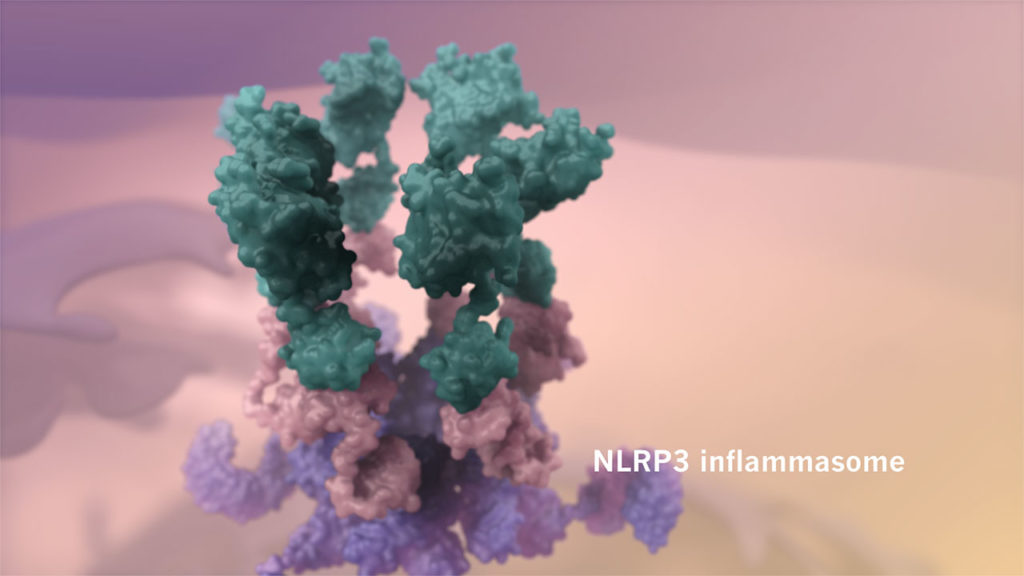 axs-studio-il-1beta-inflammasome-mechanism-of-disease-mod-animation-01