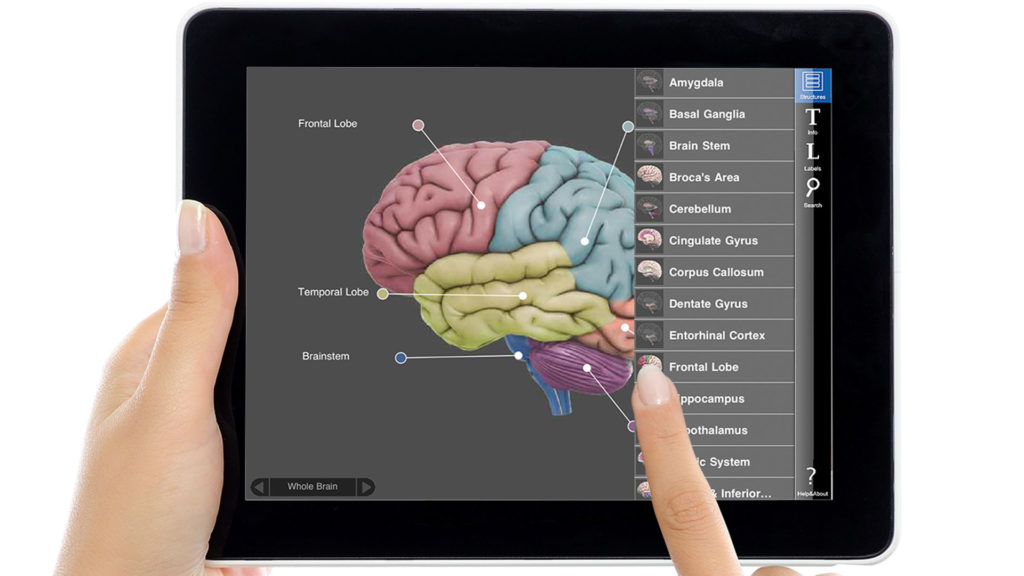 Interactive 3D Brain
