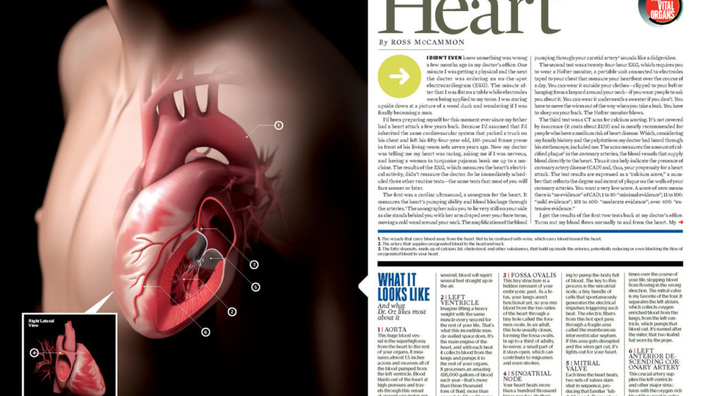 axs-studio-vital-organs-esquire-magazine-medical-illustration-032