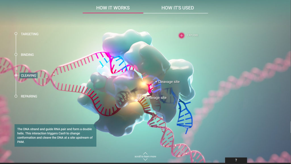 axs-studio-scientific-interactive-crispr-cas-9-HHMI-03-1