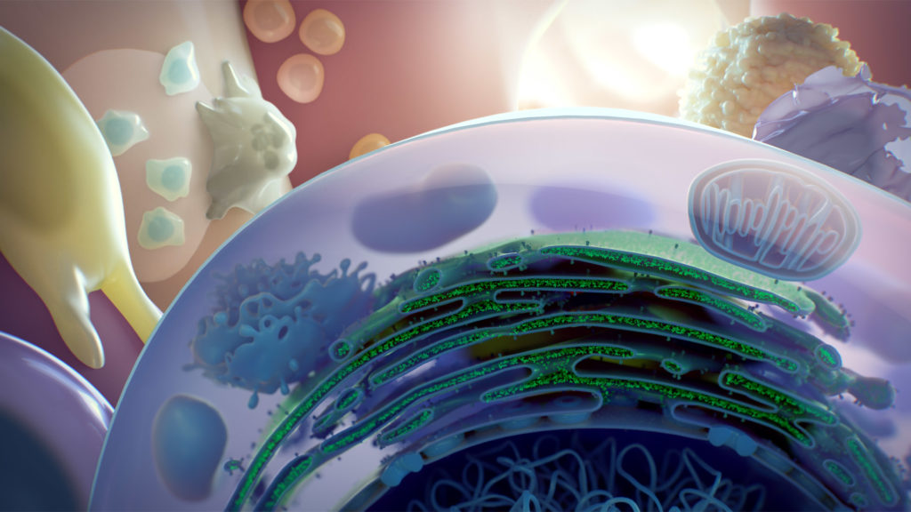 axs-studio-medical-illustration-cell-section