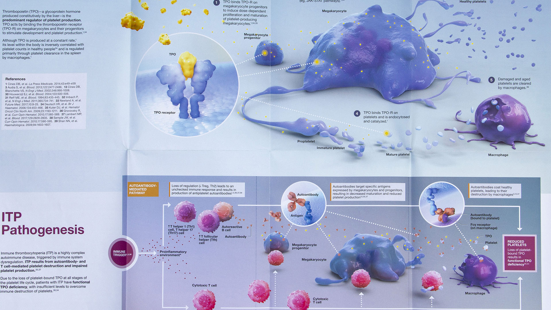 axs-studio-autoimmune-disease-itp-medical-illustration-01-thumbnail