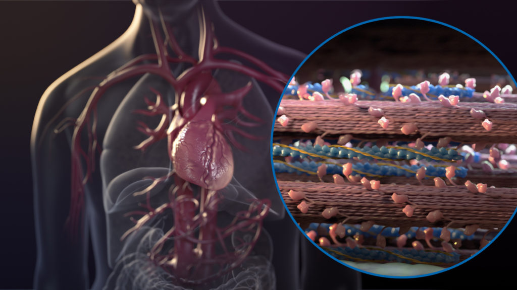 axs-studio-medical-animation-heart-failure-sarcomere-01